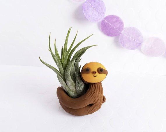 sloth air plant